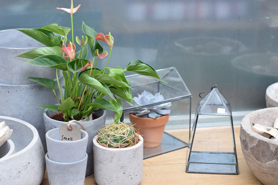 Cornercoopia-plants